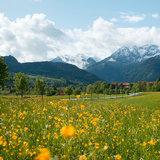 Frühlingslandschaft in Pfronten - ©Pfronten Tourismus