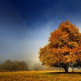 Die Hochrhön im Herbst - ©Rhön Marketing | Arnulf Müller