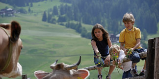 Erlebnis-Urlaub auf dem Bauernhof: Pferde, Kühe, Schafe und Ziegen gehören zum Alltag eines Südtiroler Hofes