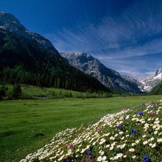 Blühende Wiese am Achensee - ©Achensee Tourismus