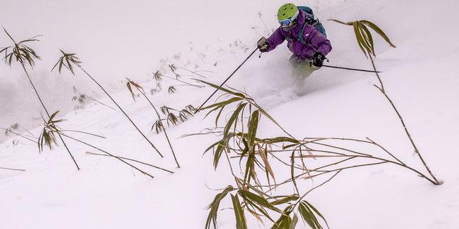 Seeking Skizen in Japan - ©Linda Guerrette