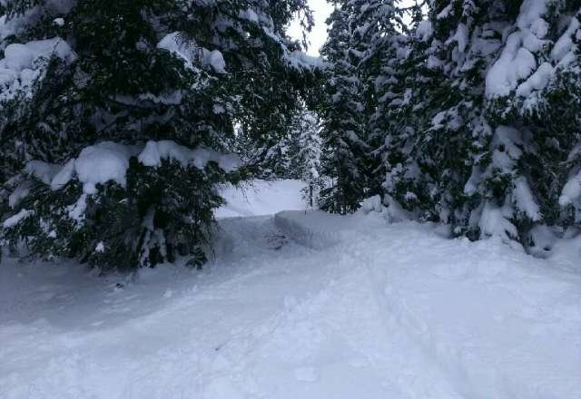 the powder from yesterday is pretty much all chewed up but some awesome glades runs off 39 and 37