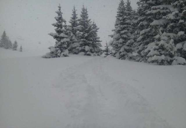 heavy deep powder. Parsenn Bowl all day! EPIC!