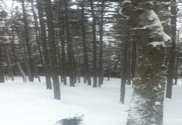skiing was awesome today! There was snow squaws today, making tight line, mogul trails like belle, and glades fresh. on intiminator, there was tons of fresh snow. that is what the picture shows. Awesome day, can't wait for winter break!!