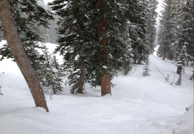great powder day @ Brighton! steady snow all day and no wind. great place for riding in the trees!!