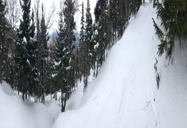 still lots of fun in the trees