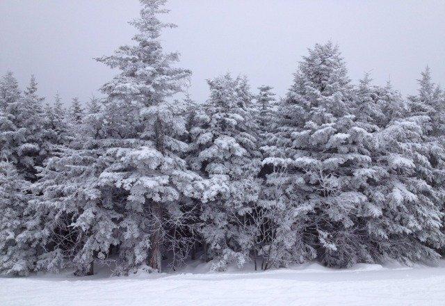 great snow on wednesday, fun mountain.