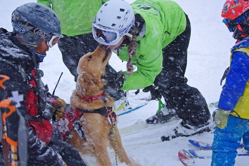 Rio is the Avalanche Dog at Arapahoe Basin. - ©Photo courtesy Arapahoe Basin Ski Area.