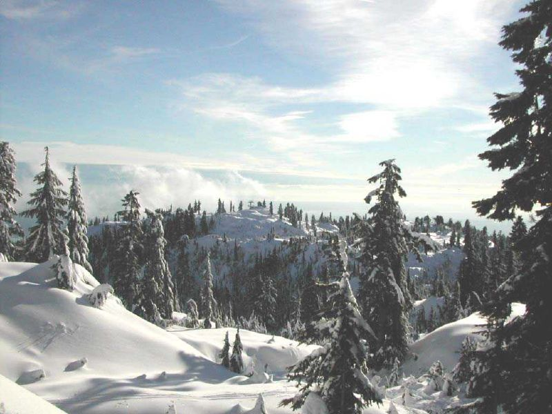 A view of the slopes of Mt Seymour