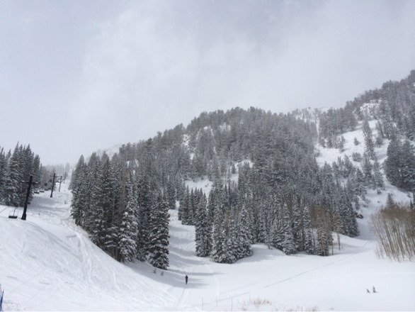 Tons of powder today and snowed all day. A little heavy but still fun!