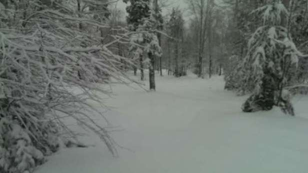 untouched glades on Friday! 5