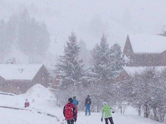 20cm so far & still snowing!