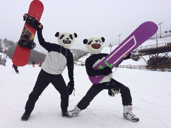 It's absolute pandamonium out there on the slopes... Stay home.