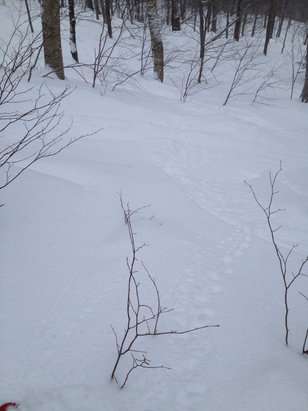 About 5-6 inches of fresh, and even more in the woods. Nobody here.
