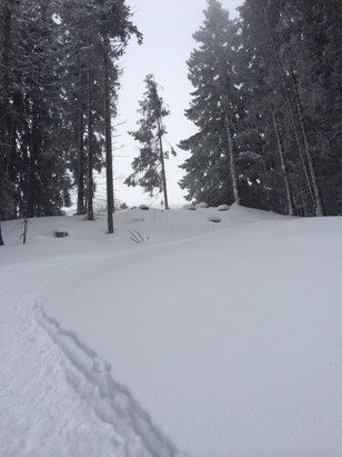 Ellmau - SkiWelt - Epic snow conditions today, limited visibility though. Fresh pow :).