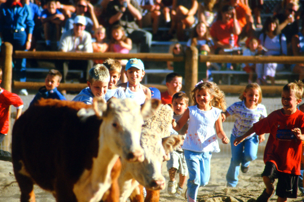 Children in the calf scramble at the Beaver Creek Rodeo.