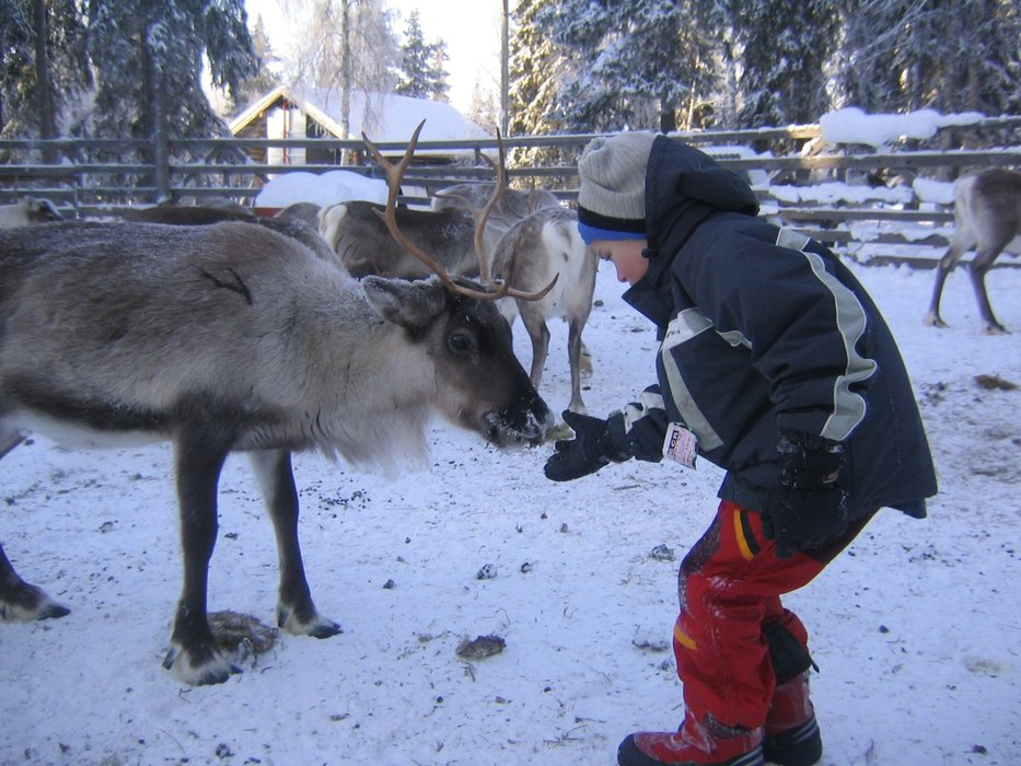 Kid feeding a reindeer in Levi, Finland