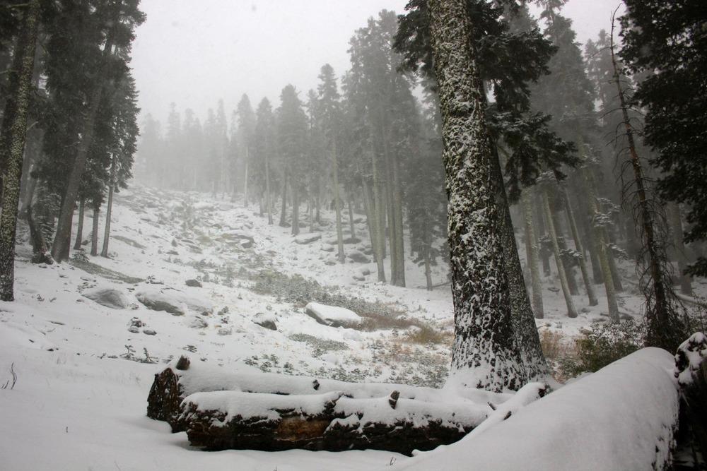 Snow on the hill at Sierra at Tahoe. Photo: Sierra-at-Tahoe/Facebook