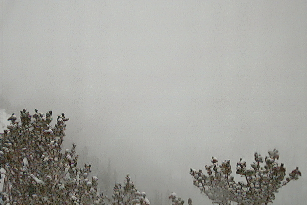 Solitude's foggy webcam. They open Nov. 14. - ©Solitude