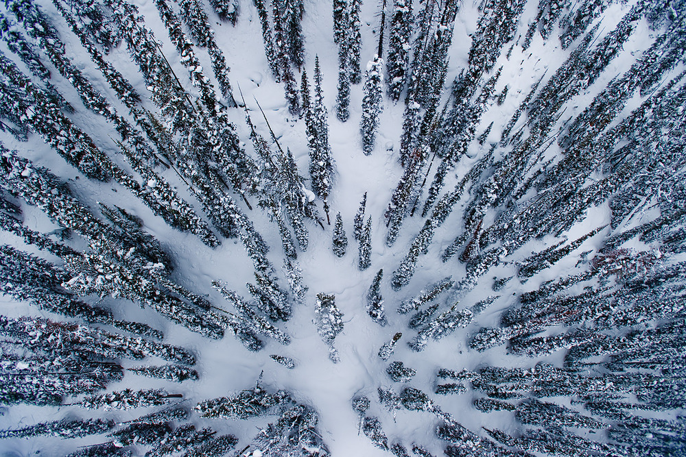 At Great Canadian Heli Skiing, stands of Engelmann Spruce and Sub Alpine Fur reach skyward while nursing a prime pillow zone in between the matrix. These two important tree species characterize much of BC's 'bio-ski-sphere'.