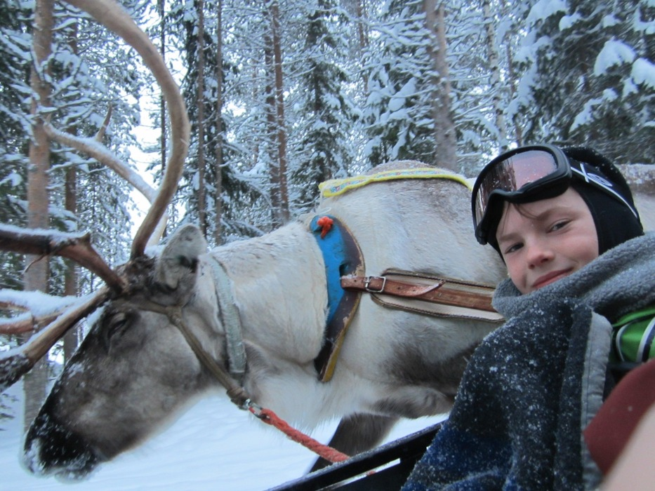 Reindeer safari in Lapland