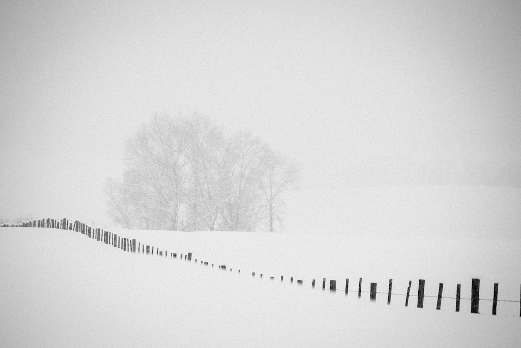 Willow trees and fenceline obscured by heavy snow.