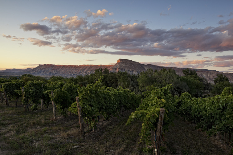 Enjoy the wine country and the unique landscape around the Grand Junction area. - ©Photo courtesy Grand Junction Visitor & Convention Bureau.
