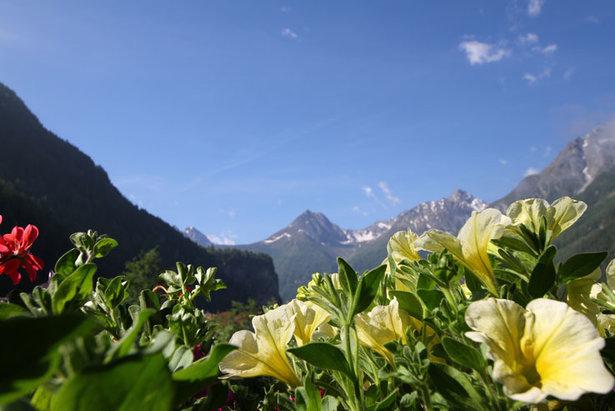 Das Originalbild aus dem Ötztal: Blumen vor Berghintergrund