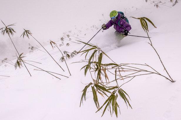 Bamboo skiing - ©Linda Guerrette