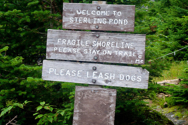 Sterling Pond is full of rainbow and brown trout sure to please any angler. - ©Carrie Kasper