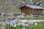 La Fête de la Montagne dans le Dévoluy - ©OT du Dévoluy