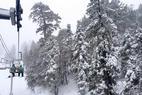 Mountain High - Fresh snowfall blankets trees