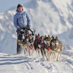 chiens de traineau crest voland - ©OT Val d'Arly