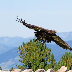 Die Adlerbühne am Ahorn - ©Didi Wechselberger