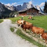 Salzburger Saalachtal - ©Tourismusverband Salzburger Saalachtal | Walter Schweinöster