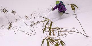 Skizen in Giappone - ©Linda Guerrette