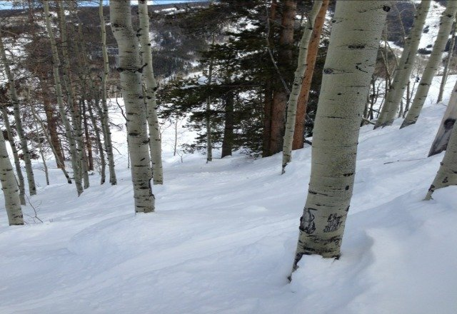 deep pow in the glades in arrowhead