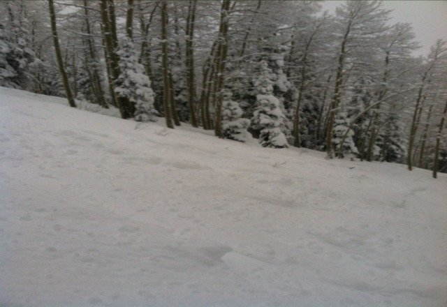 this was today on shadows. rode with snow up to my knees all day in the trees