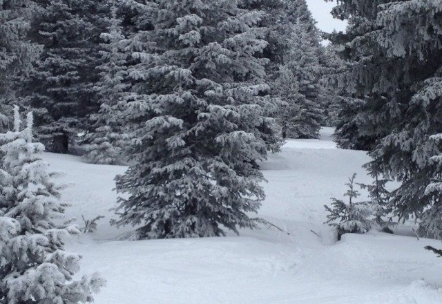 Pete's & Blue Sky were good early.   some pow left in the trees. need a couple of dumps. afternoon is sketchy.
