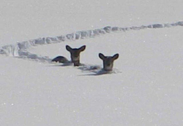 Look! It's Bambi!!!