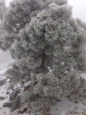 Snow storm on the summit !