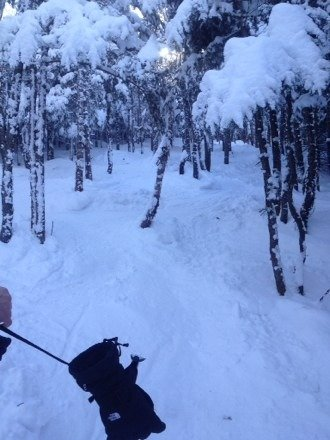 Great day yesterday.. No lines and good snow in the glades