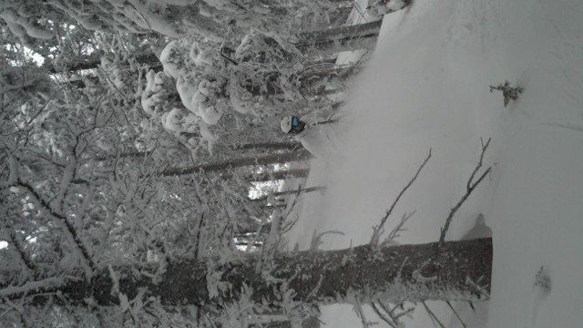 """More """"trail closed"""" signs than ever been seen at TSV. Pow hunting skills are a must with all the used up runs. Great time gnar hunting in the trees!!"""