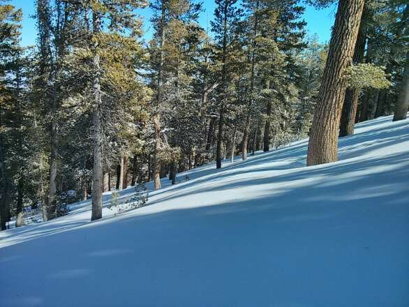 had a great day. up to a foot drifted into the trees (leeward side of slopes), icy in spots where wind blown.