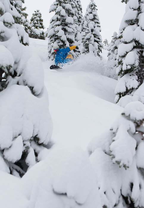 Powder and tree riding at Squaw Valley. - © Jeff Engerbretson
