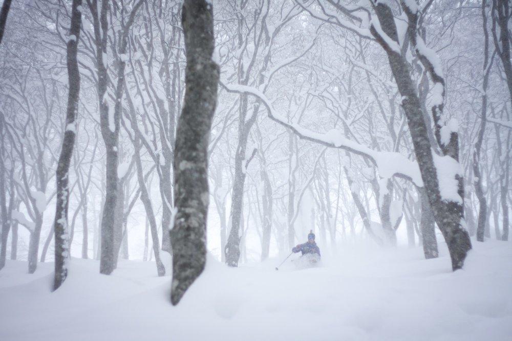 Skikjøringen i Japan gir deg uante muligheter. - © Terje Valen Høihjelle