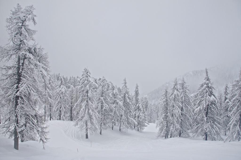 Monterosa Ski, Neve fresca 10 Novembre 2014
