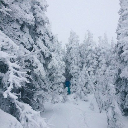 Still finding fresh tracks up top with access from the T-Bar. Was snowing up there this morning. No ice up there. Today had heavy fog above mid-mountain and super hard to see in the bowls. The rest of the mountain is tough to manage and it's been raining near the bottom.