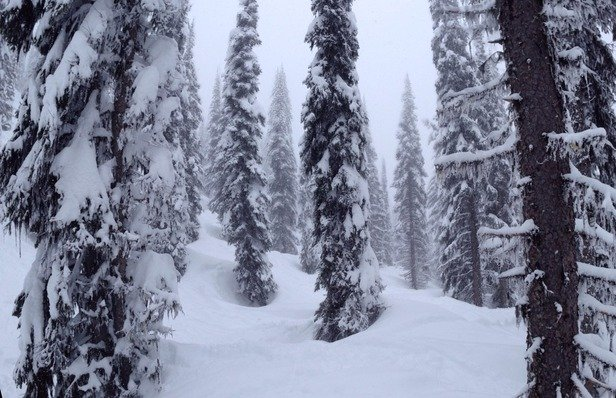 It's not a perfect pow day, but it's  fantastic anyways!  Approx 30cm from top of stoke chair to bottom. Snow gets heavier as you descend in elevation.
