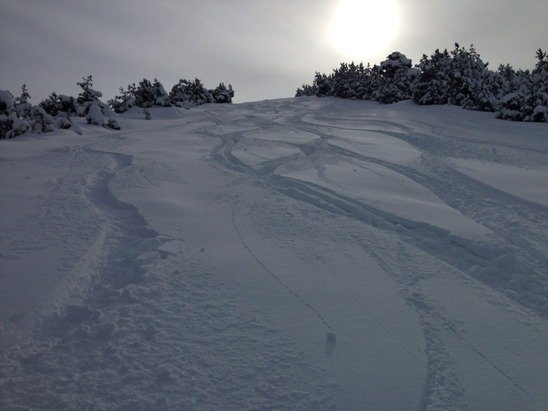 35cm of fresh snow last night - powder heaven today!